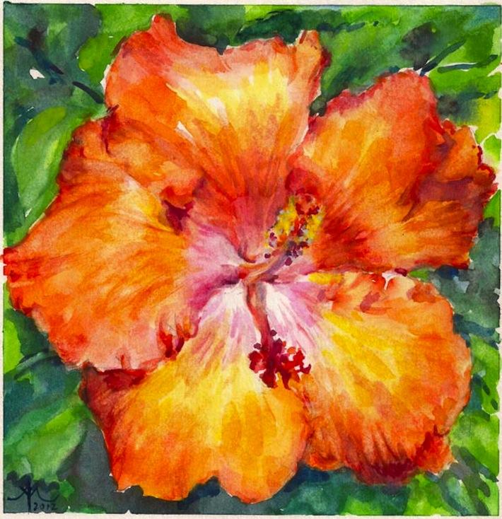 Hibiscus-orange-2012