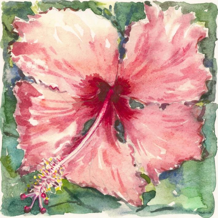 Hibiscus rose froufrou