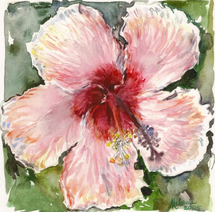 Hibiscus rose multi