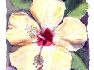 Hibiscus jaune pâle