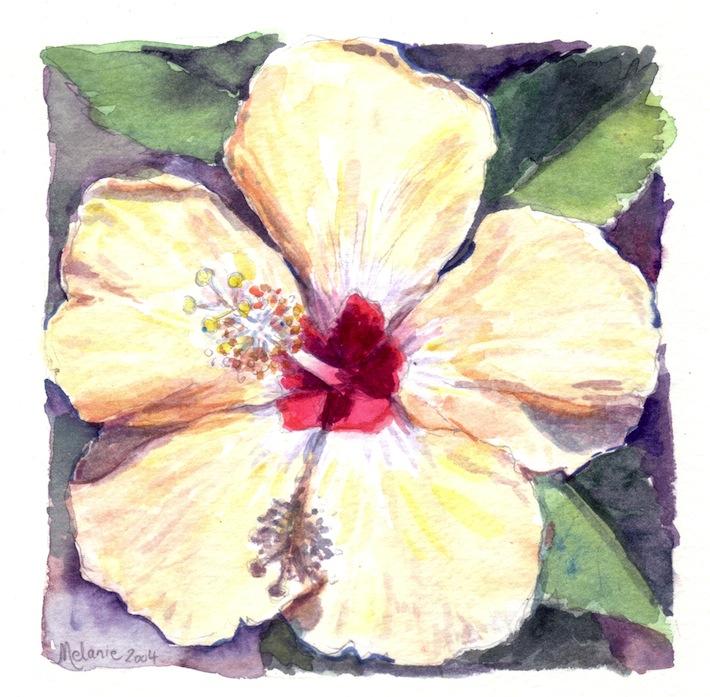 hibiscus jaune pale