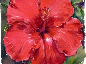 Hibiscus Rouge Rond