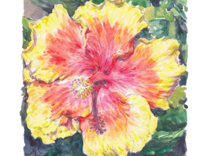 Hibiscus Sunburst