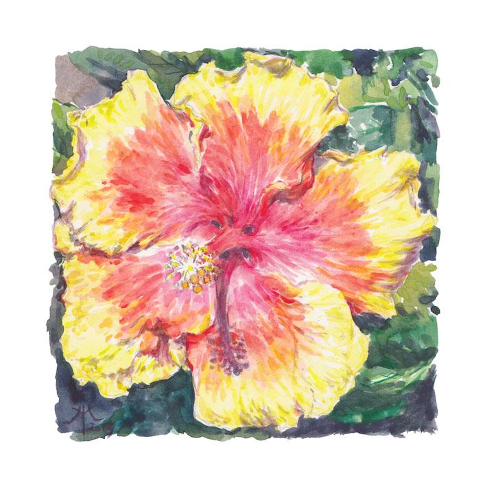 Hibiscus Sunburst 2015