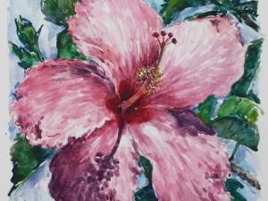 Hibiscus magenta