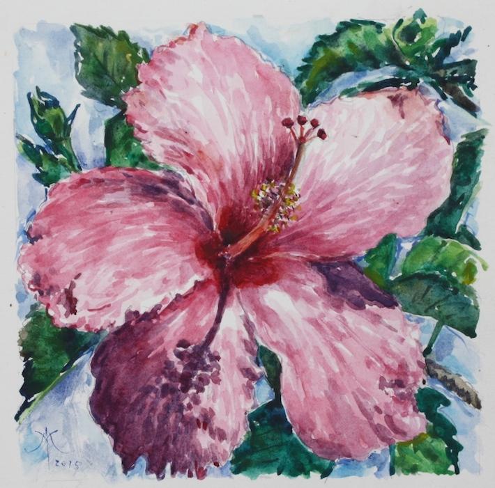 Hibiscus magenta 2015