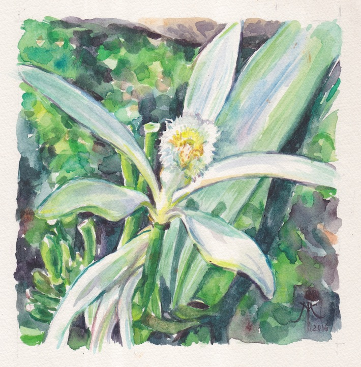 vanilla-orchid-2016